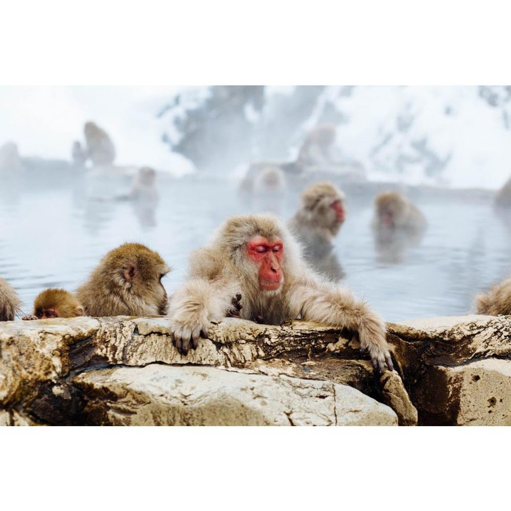 Japanmakaken genießen ein warmes Bad
